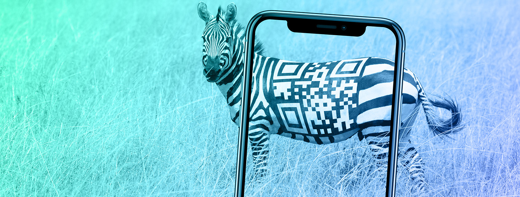 Zebra with a QR code on to be scanned